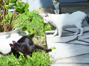 Кошек в Герцег-Нови очень много